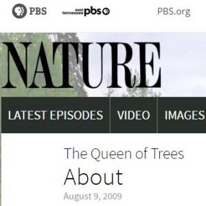 queenoftrees